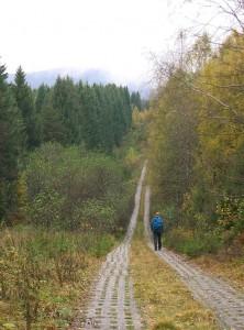 Harz - Grenzweg
