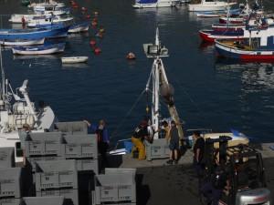Playa San Juan - Thunfischfang